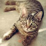 【ワテの警告】ペットが失明の恐れ レーザーポインターは危険だ