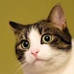 面白い動画【猫編】ネコに死んだふりすると予想外の結末が